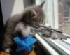 epic_life_fail: (KITTY sniper cat)