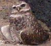 melydia: (owl)