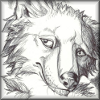 kjorteo: Portrait of Marcus Noble, a wolf character from my novel, looking equal parts exhausted and nervous. (Afflicted: Marcus)