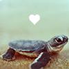 k_nic: (turtle love)