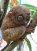 bubbleigh: (anxious tarsier)