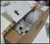 deerosie: (kitten in box)