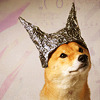 supertights: Image of a dog wearing a tinfoil hat (Dog, Tinfoil hat)