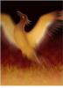 moongladewoman: (Phoenix)