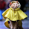 supertights: Image of a cat wearing a yellow raincoat (Yellow, Raincoat)
