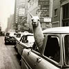 supertights: Image of a llama with it's head out of a car window (Llama)