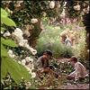 3valution: (garden, spring)