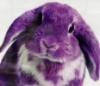 easybeinggreene: (purple Greene)