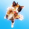 ihearttoronto: (kitten jumping)