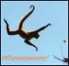 woolymonkey: (spidermonkey)