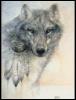 galdrin: (Spirit Wolf) (Default)