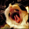 collisionwork: (angry cat)