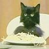collisionwork: (spaghetti cat)