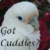 smile_n_cuddle: (cockatoo)