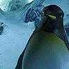 tyler_gone: ([ooc] penguin)
