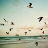 chestnutcurls: (beach)