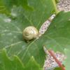 darcydodo: (snail)
