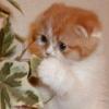 kortirion_among_the_trees: (cat closeup)