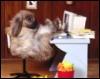 deerosie: (plot bunny)