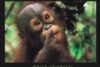 raisakushnir: (любопытная обезьянка)