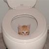 fersakyn: (Toilet-trained)