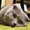 fersakyn: (sad kitty)