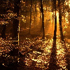 jadey36: (forest)