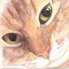 aidadesigns: Ginger tabby painted in watercolor, head closeup (Default)
