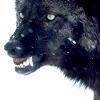 bitten_notshy: ([spec] distant wolf)