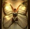 kargona: (butterfly)