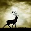 hardparade: (deer)