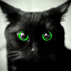 swartzkatze: (Black cat with green eyes)