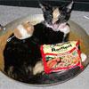 sharan: (kitten frying pan)