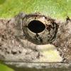 hiding_in_side: (frog)