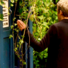 star_swan: (12 Tardis Trees)