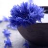 roesslyng: (Flower - Rukkilill)