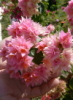 j3ss_j0i0607: (Flower) (Default)