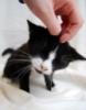 marchia43: (Kitty)