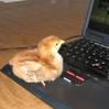 geekchick: (geek chick)