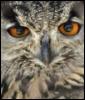 nico1908: (Owl)