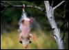 nico1908: (Possum)