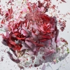 hp_may_madness: (shattered rose)