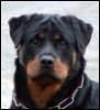 dog: (Default)