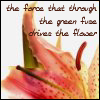 tavella: (flower)