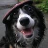 rhiannon_black: (smiling dog)
