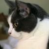 rhiannon_black: (arizona profile)