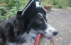 rhiannon_black: (pirate dog)