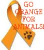 rhiannon_black: (orange for animals)