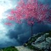 gilpin25: Pink Tree (tree)