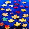 aimes2112: (leaves)